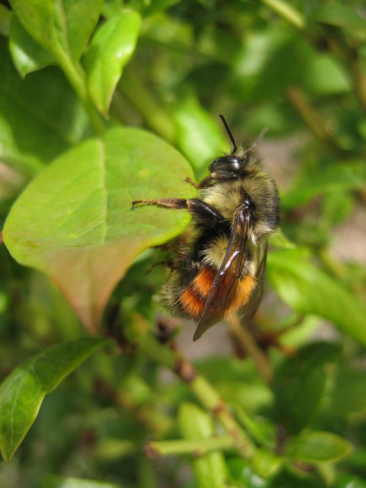 2-bumble-bee